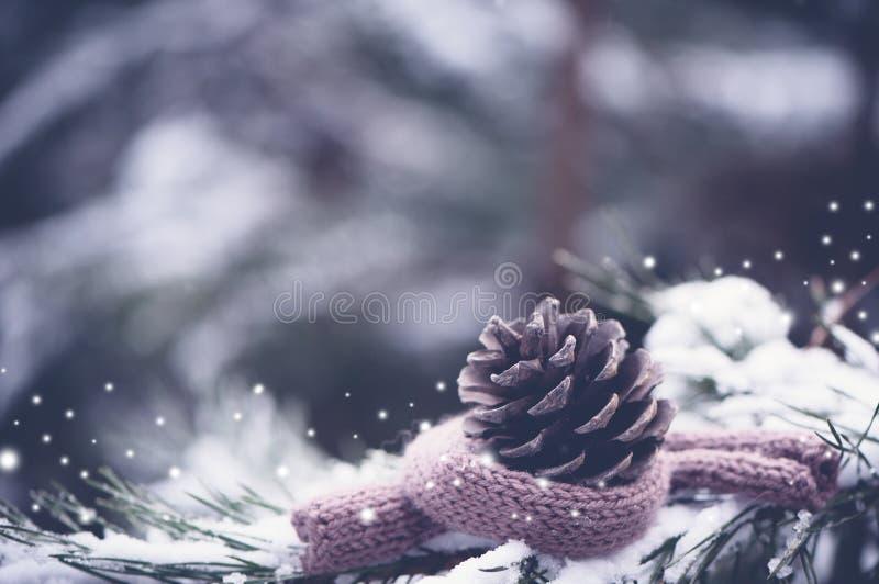 Siks del pino in una sciarpa calda tricottata su un bello, natura naturale fotografie stock