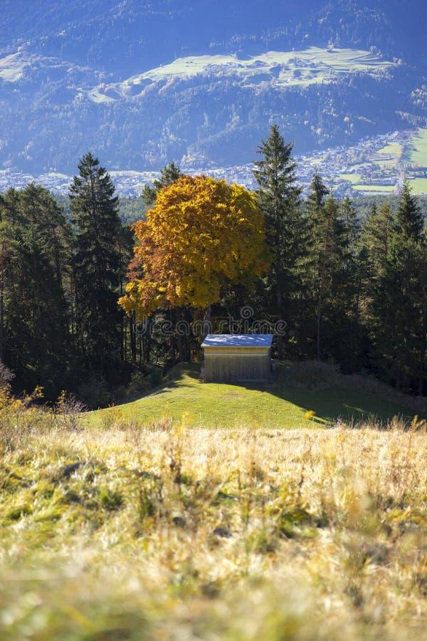 Sikt över en alpin dal med höstträd royaltyfri foto