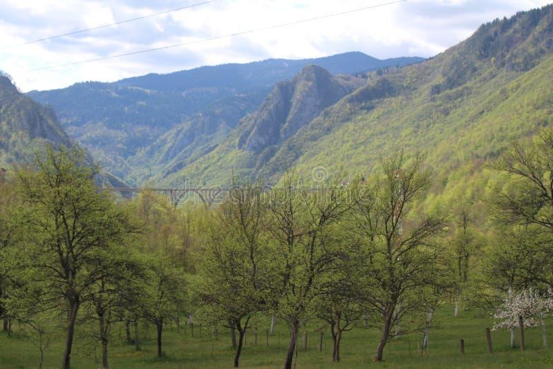 Sikt ‡ a Tara Bridge, en för eviÄ på för Ä-urÄen 'av de mest härliga broarna i världen royaltyfria foton