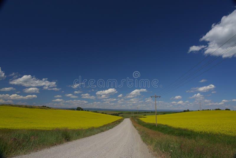 Sikt av asfaltvägen i härligt grönt fält med blå himmel arkivfoton