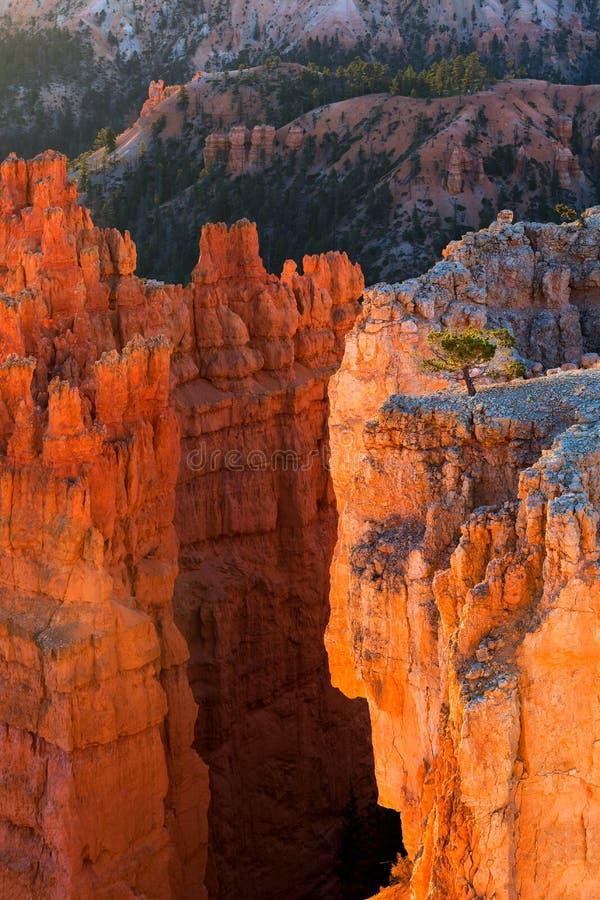 Sikt av att bedöva olycksbringare för röd sandsten i Bryce Canyon National royaltyfri fotografi