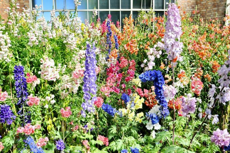 Sikt av att växa för blommor inom det tropiska varma huset på den Auckland områdeswintergardenen royaltyfri fotografi