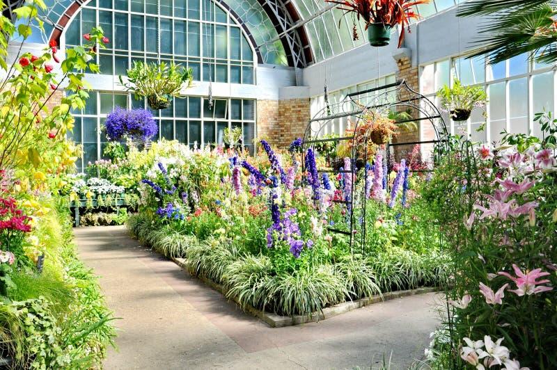 Sikt av att växa för blommor inom det tropiska varma huset på den Auckland områdeswintergardenen arkivbilder