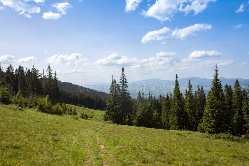 sikt av bergen i Carpathians royaltyfri bild
