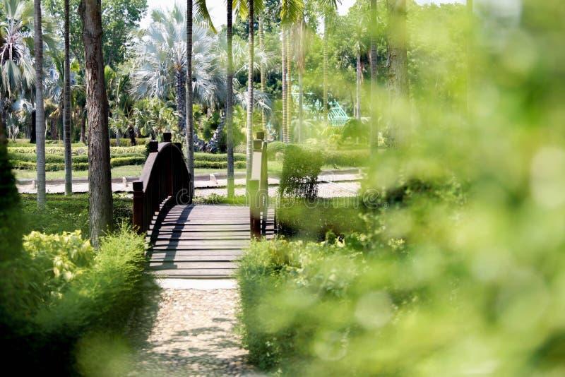Sikt av botaniska trädgården för drottning Sirikit, Chiang Mai, Thailand arkivfoton