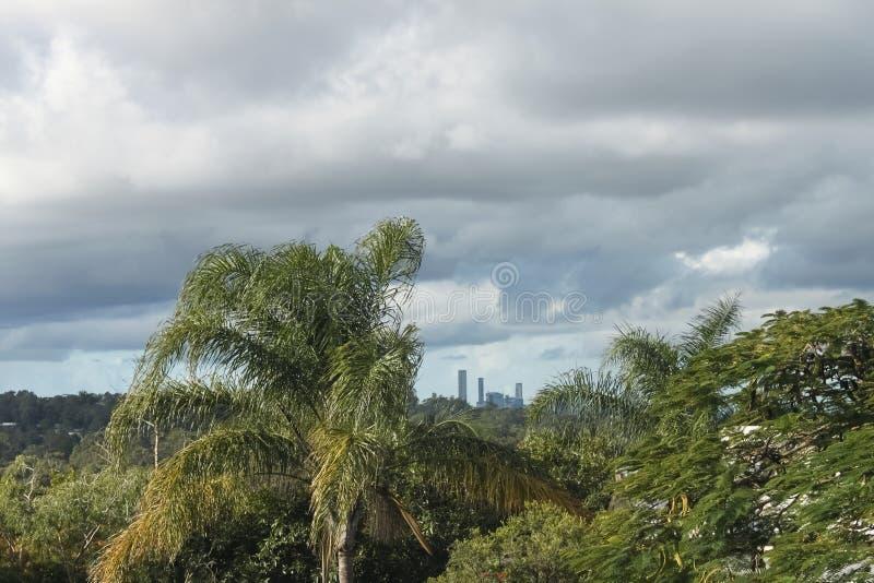 Sikt av Brisbane Australien horisont till och med tropiska träd från sydost under stormig himmel royaltyfri foto