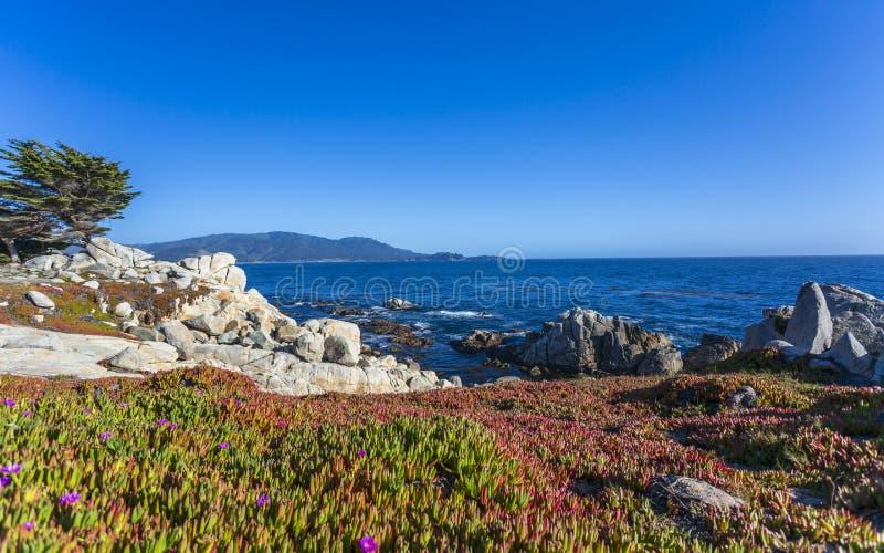Sikt av Carmel Bay och ensamma Cypern på Pebble Beach, 17 mil drev, halvö, Monterey arkivfoto