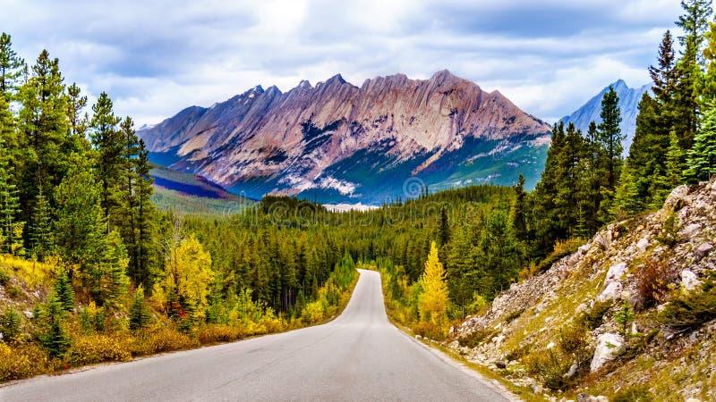 Sikt av Colin Range i Jasper National Park, Alberta, Kanada royaltyfri fotografi