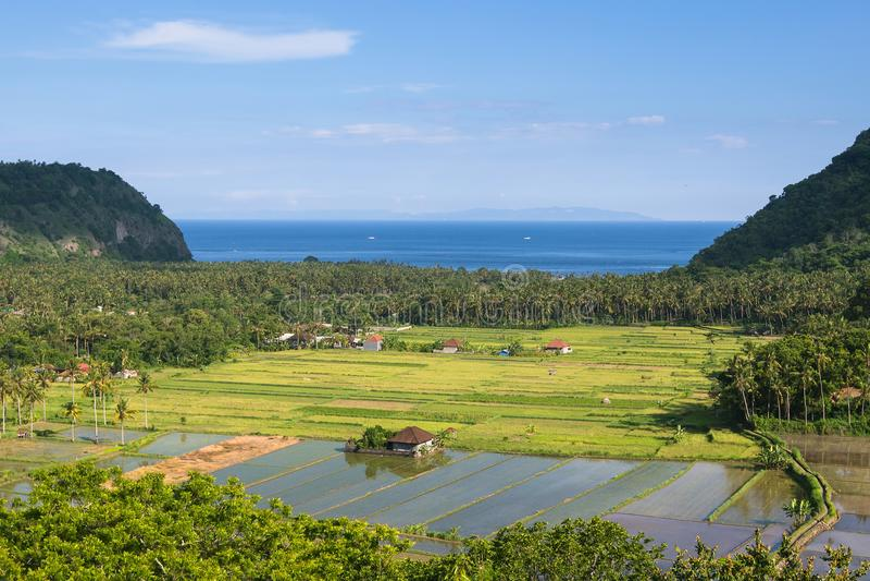 Sikt av dalen med risfält på den Bali ön, Indonesien asiat arkivbild