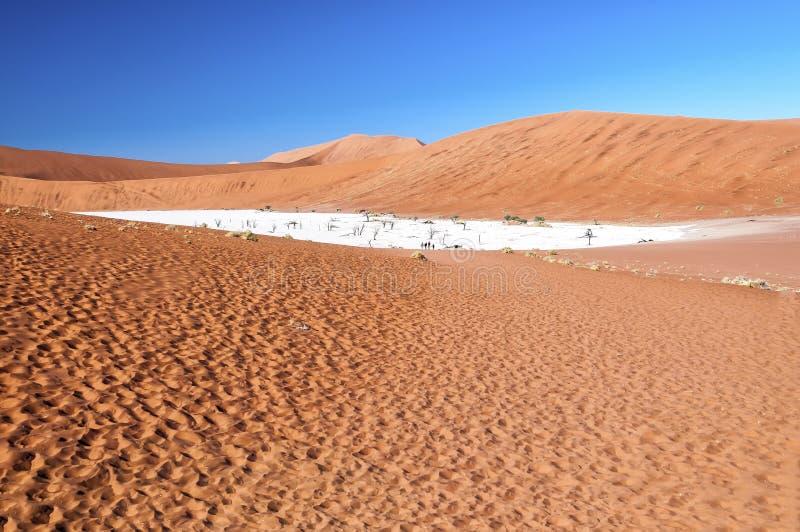 Sikt av Deadvlei i ottan, Namibia royaltyfria bilder