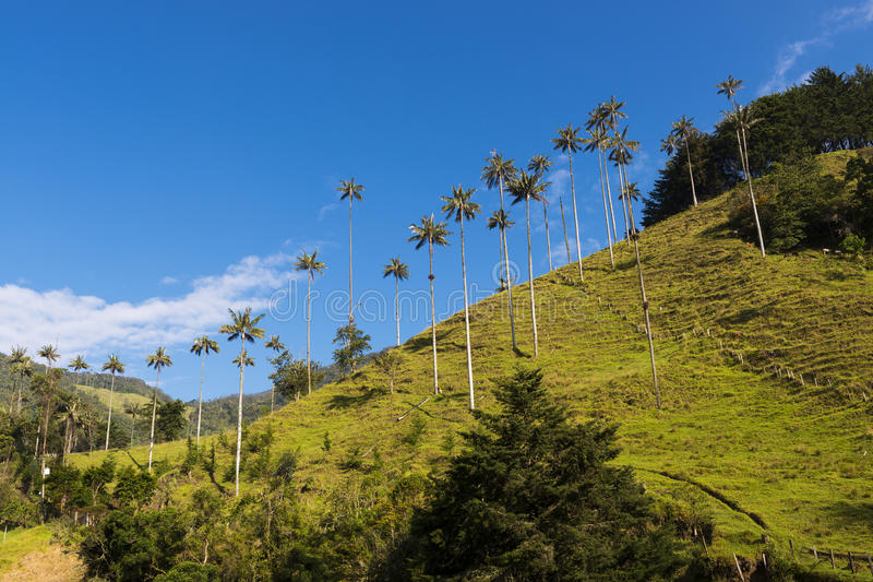 Sikt av den Cocora dalen Valle del Cocora i Colombia arkivbilder