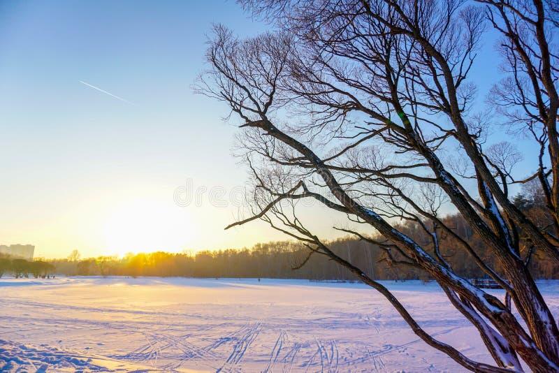 Sikt av den djupfrysta sjön på solnedgången Gamla träd gör bar filialer i förgrunden Stora kulöra himlar med aftonsolen arkivbild