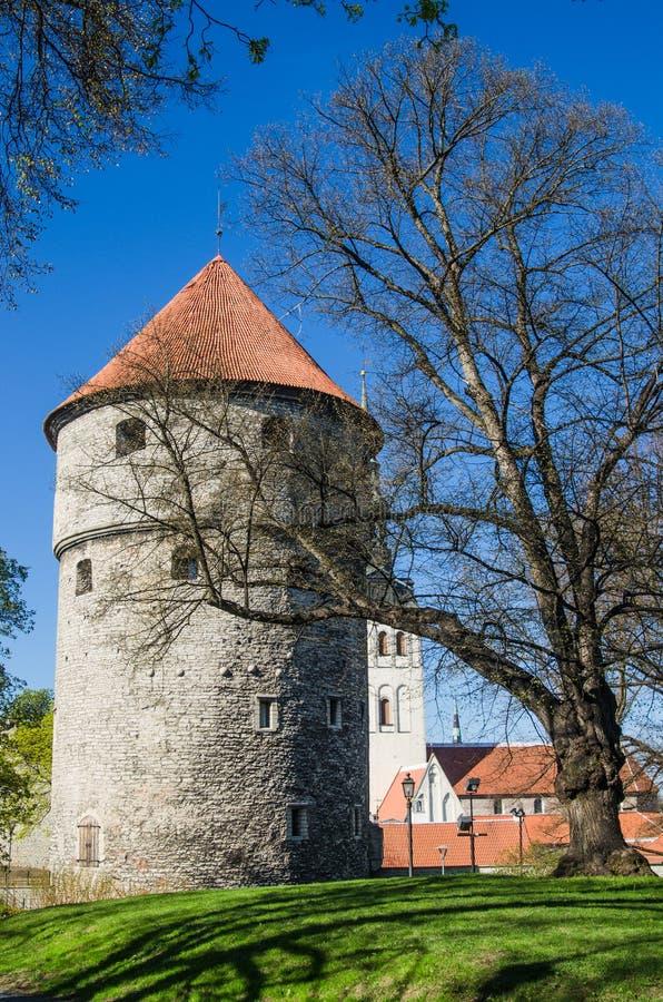 Sikt av den gamla Tallinn härliga vårdagen arkivbilder