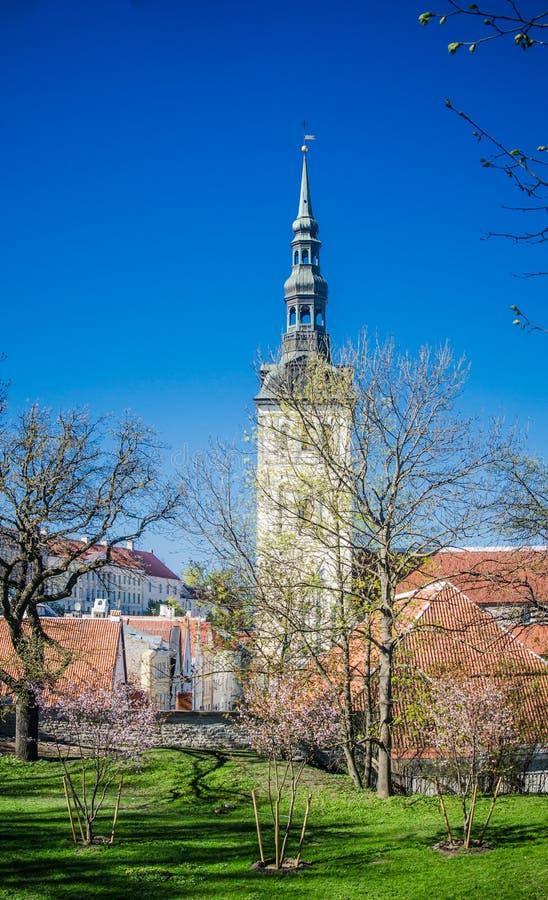 Sikt av den gamla Tallinn härliga vårdagen royaltyfria foton