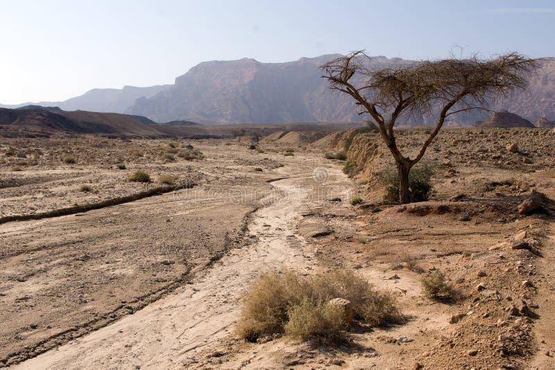Sikt av den israeliska öknen i höst royaltyfri foto