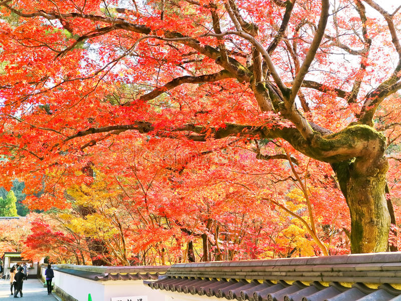 Sikt av den japanska templet i höst i Kyoto, Japan royaltyfria bilder
