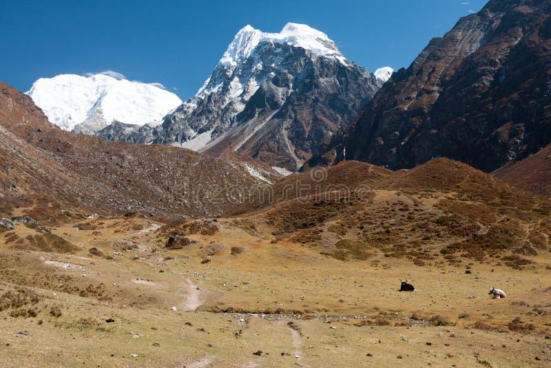 Sikt av den Langtang dalen, Langtang nationalpark, Rasuwa Dsitrict, Nepal arkivbilder