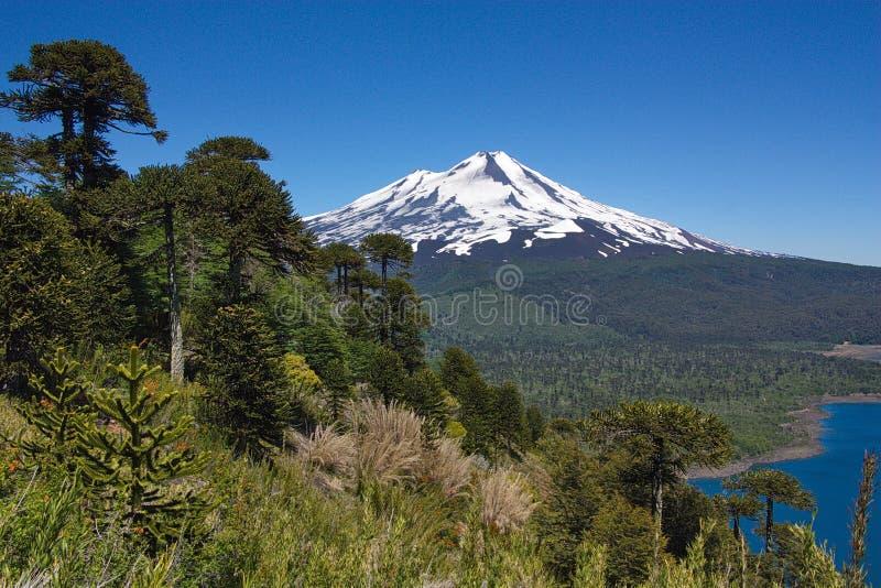 Sikt av den Llaima vulkan i Chile royaltyfri bild