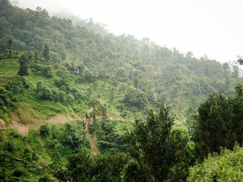 Sikt av den Neora dalnationalparken från Samsing Rocky Island by, Jhalong lägerområde, Suntalekhola Samsing, Kalimpong som är väs royaltyfria bilder