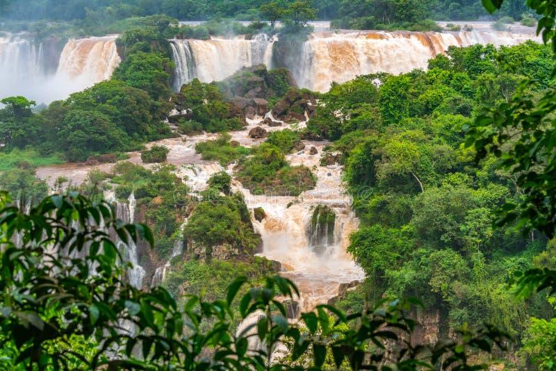 Sikt av det berömda Iguazuet Falls från brasiliansk sida royaltyfri foto