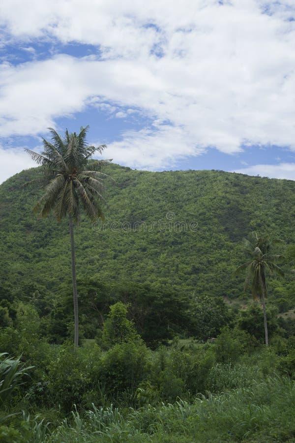 Sikt av det gröna fältet, trädet, kokospalmen och gräsplanberget med blå himmel och molnet, selektiv fokus, naturlig färgbildstil royaltyfria foton