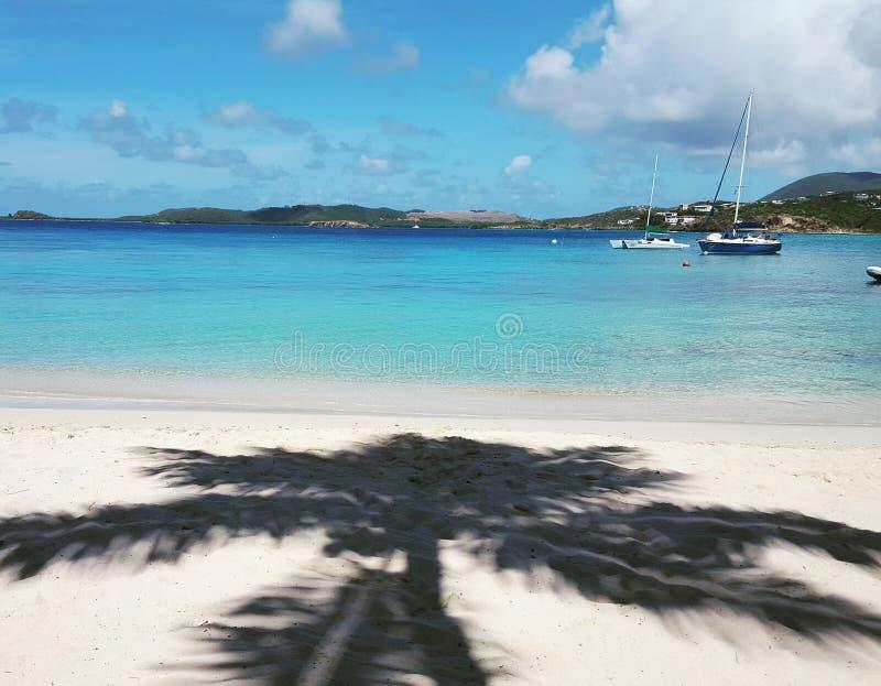 Sikt av det karibiska havet med kokospalmskugga royaltyfri foto
