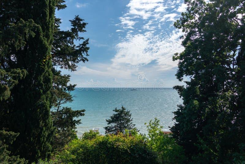 Sikt av det lugna havet till och med de forntida träden Black Sea Sochi arkivfoton