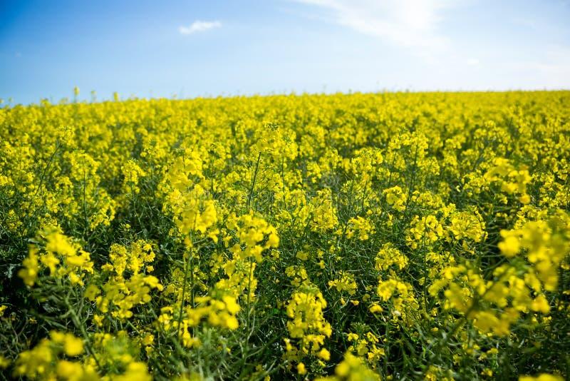Download Sikt Av Det Senapsgula Fältet Arkivfoto - Bild av blomma, hemhjälp: 78725370