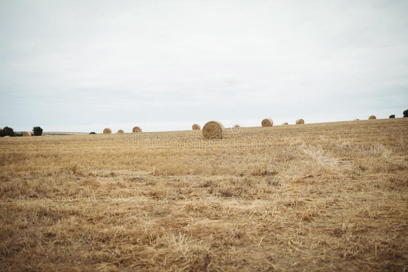 Download Sikt Av Det Skördade Fältet Arkivfoto - Bild av oklarhet, fält: 78726092