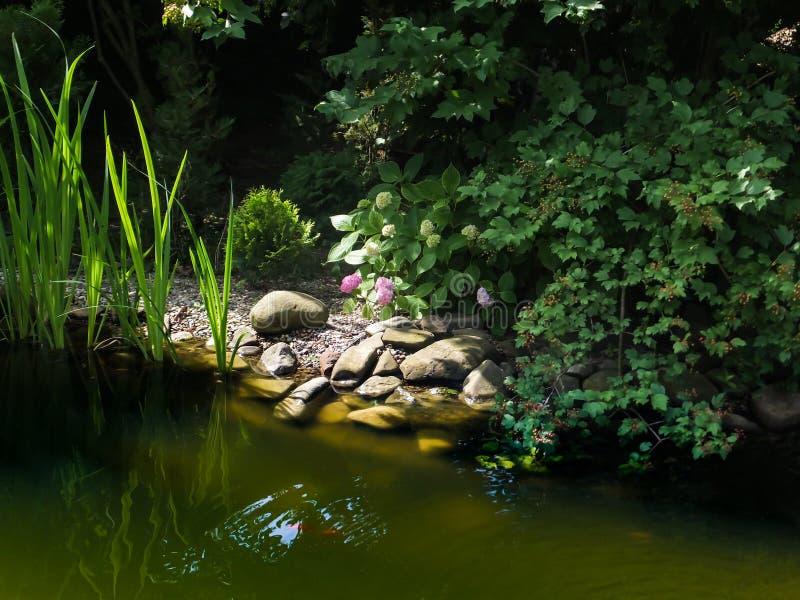 Sikt av det soliga dammet med gröna högväxta iriers, stora stenar på dammkusten och buskar av att blomma vanliga hortensior och v fotografering för bildbyråer