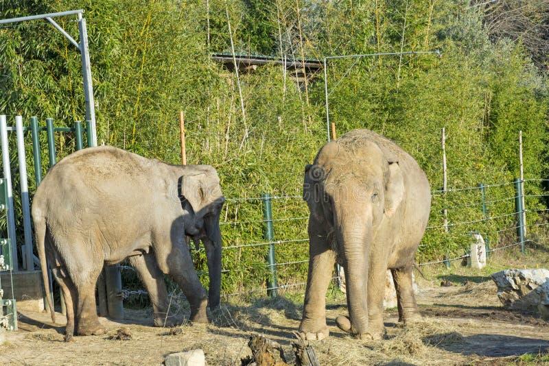 Sikt av elefanten på zoo arkivfoton