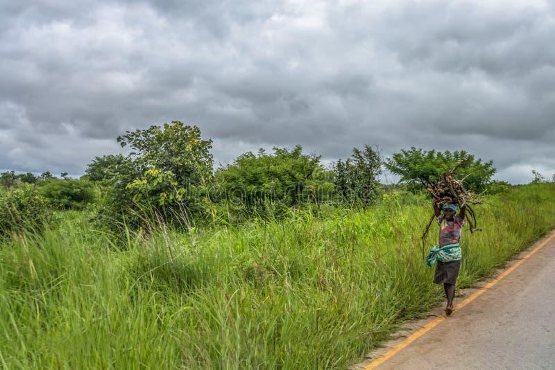Sikt av en äldre kvinna som ryktar ris på huvudet, längs vägrenen, tropiskt landskap som bakgrund fotografering för bildbyråer