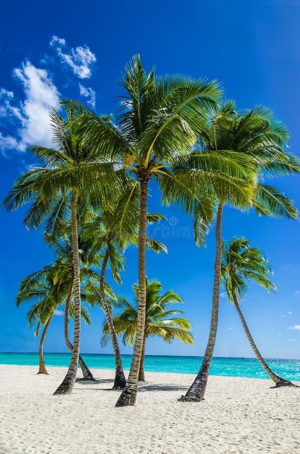 Sikt av en exotisk strand med högväxta palmträd och guld- sand arkivfoton