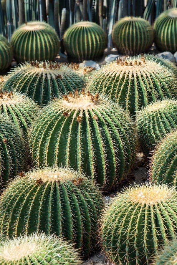 Download Sikt av en kaktus arkivfoto. Bild av växt, natur, färg - 76702102