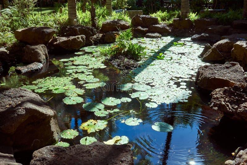 Sikt av ett damm mycket av lotusblomma med stora stenar som omger den royaltyfri fotografi