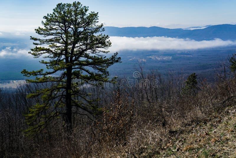 Sikt av ett sörjaträd och en dimmig dal royaltyfri foto