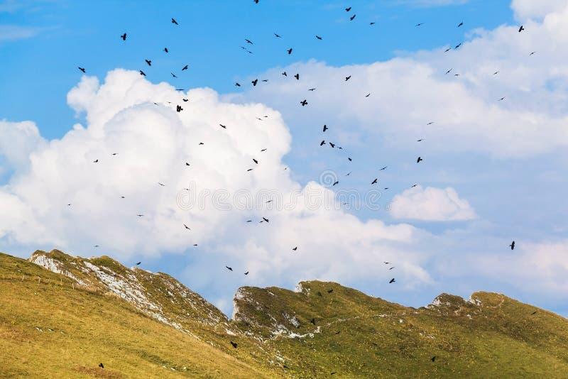 Sikt av fjällängar och fåglar på Rochersen de Naye, Schweiz arkivbild
