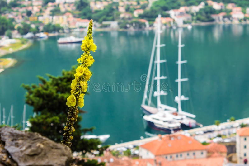 Sikt av fjärden med yachter Kotor Montenegro arkivbilder