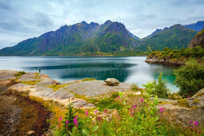 Sikt av fjorden stenig seashore Härlig natur av Norge arkivfoto