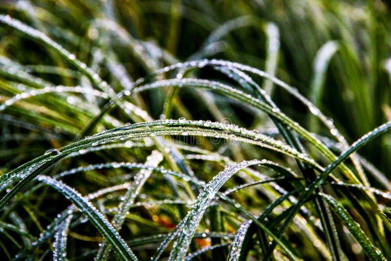 Sikt av höstgräs tidigt på morgonen royaltyfria foton