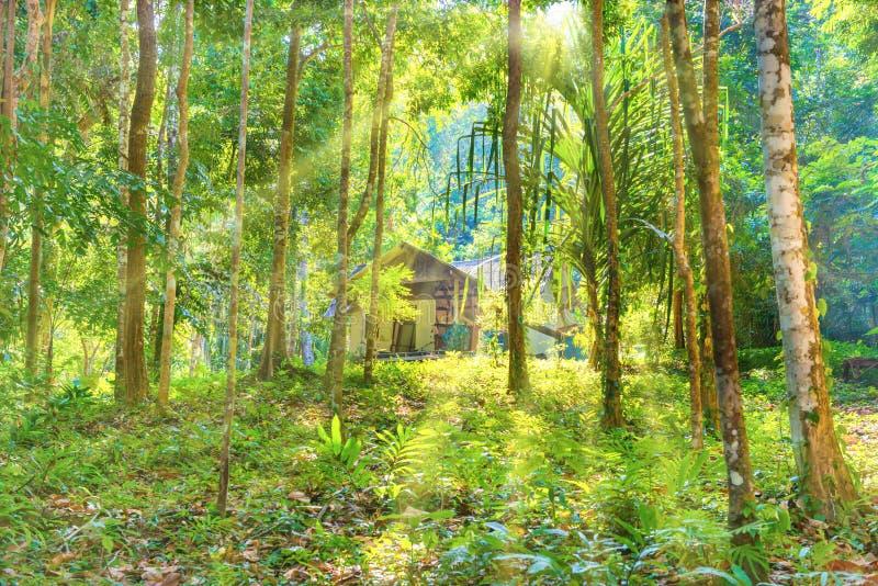 Sikt av huset bland tropisk djungelskog royaltyfri bild