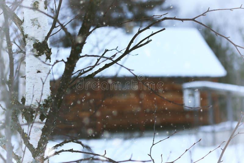 Sikt av huset från skogen royaltyfria foton