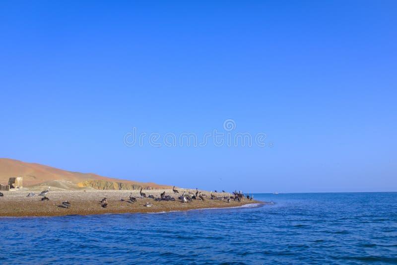 Sikt av Islas Ballestas i Peru royaltyfria bilder