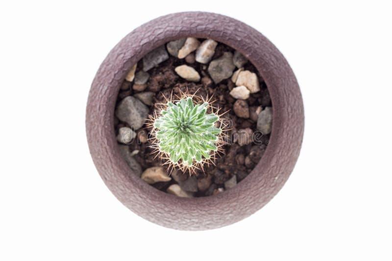 Sikt av kaktuns fr?n ?ver Spiny kaktus royaltyfria bilder