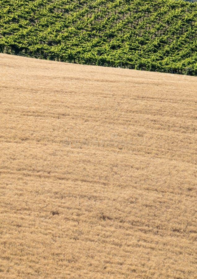 Sikt av kornfält och vingårdar på Rolling Hills av Abruzzo arkivbild