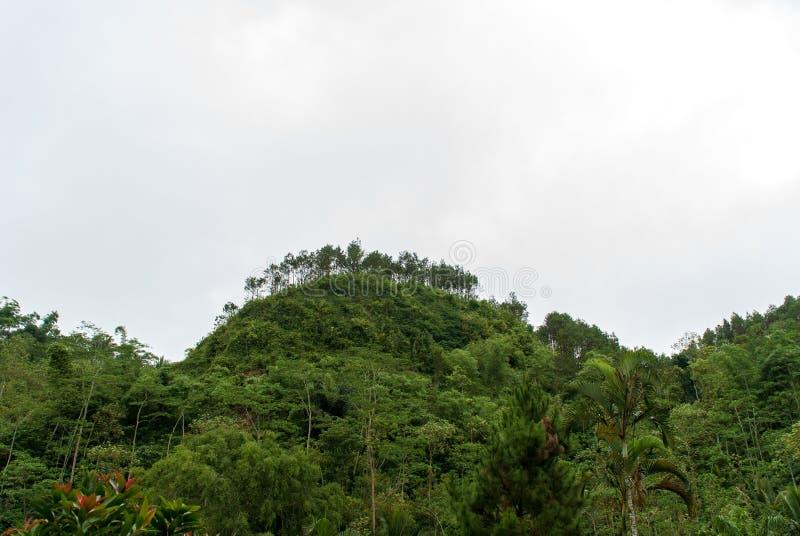 Sikt av kullen ovanför grottan som är seplawan i purworejoen, Indonesien arkivbild