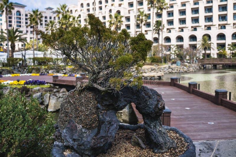 Sikt av Lotte Hotel Jeju royaltyfri fotografi