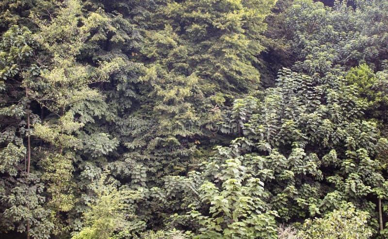 Sikt av många sorter av träd arkivfoto