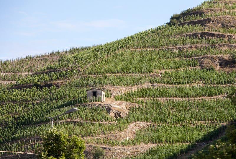 Sikt av Met Chapoutier Crozes-eremitboning vingårdar i Tain l `-eremitboning, Rhone dal, arkivfoto