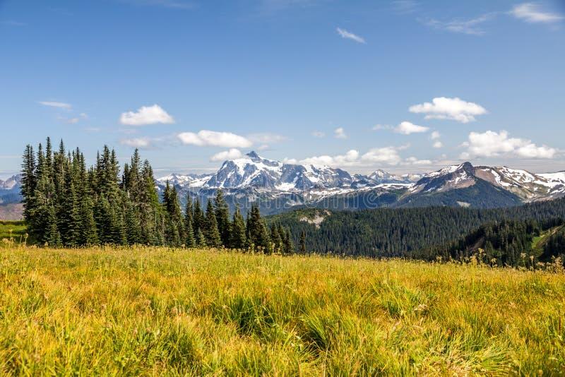Sikt av Mt Shuksan över alpina ängar av horisontskiljelinjen arkivbilder